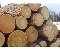 Product Catalog Global Timber And Wood Products